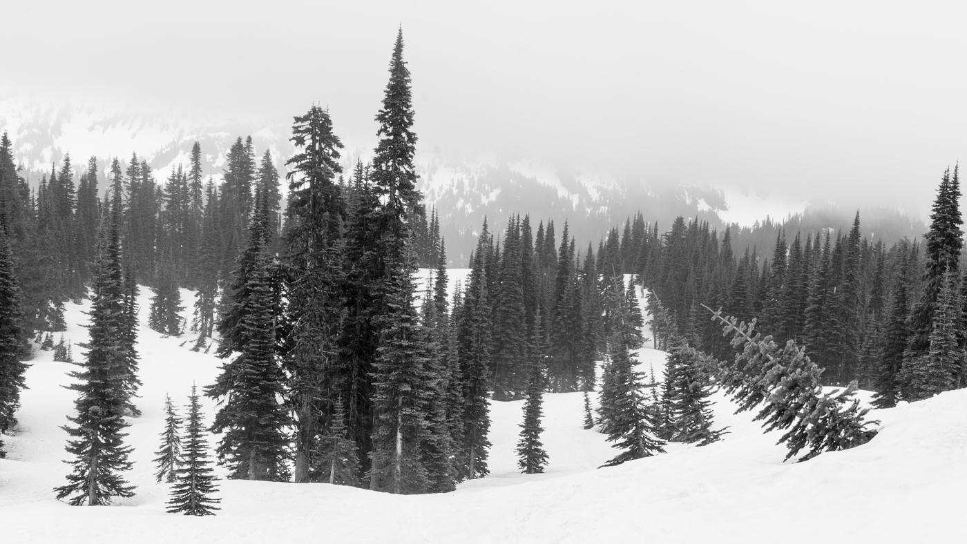 Paradise, Mt. Rainer National Park, Washington