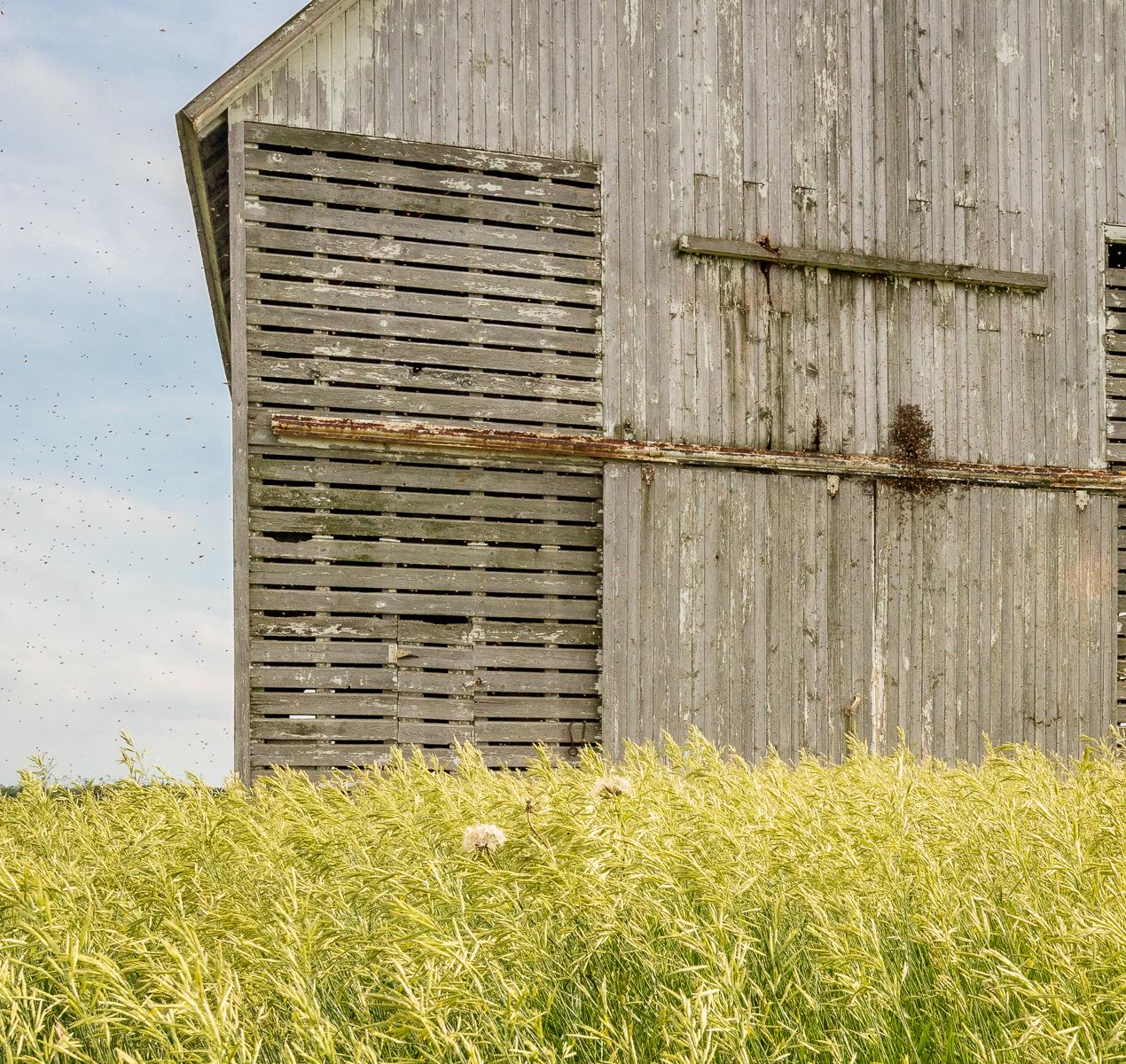 Corn crib and bees, Stark County, Illinois