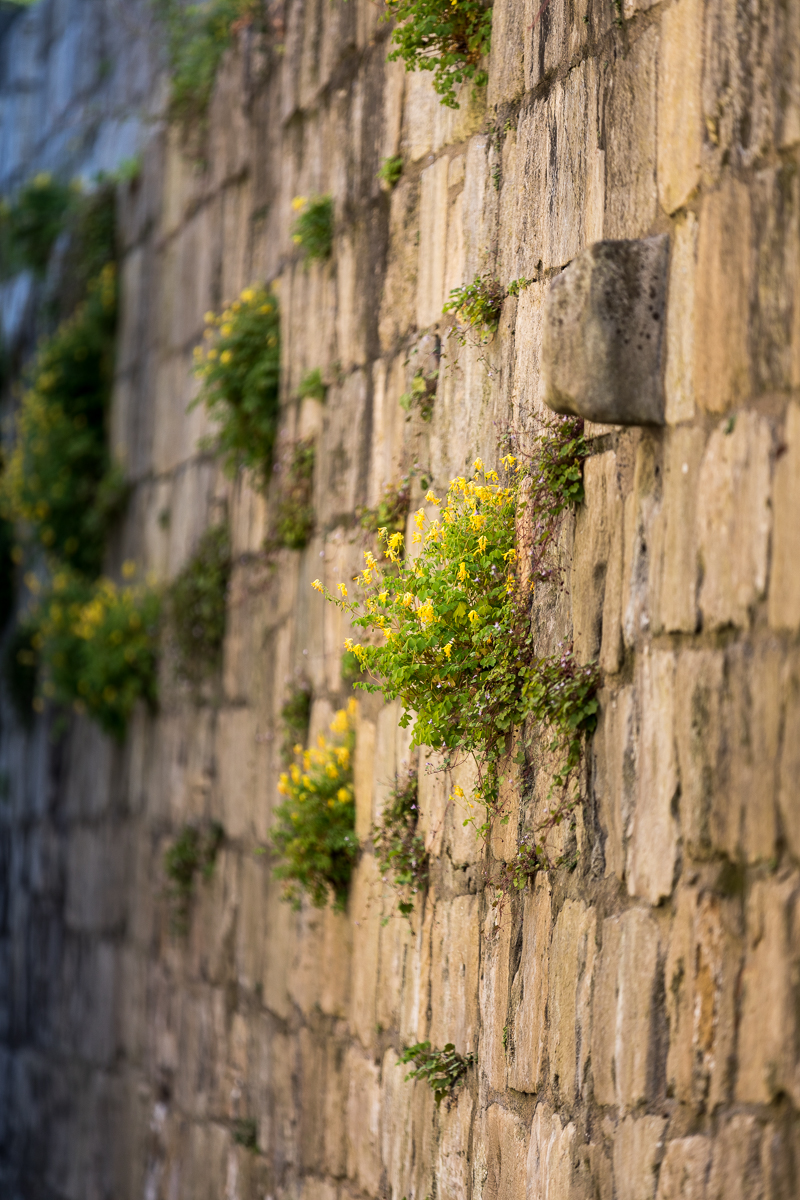 York wall large flowers (13 of 1).jpg