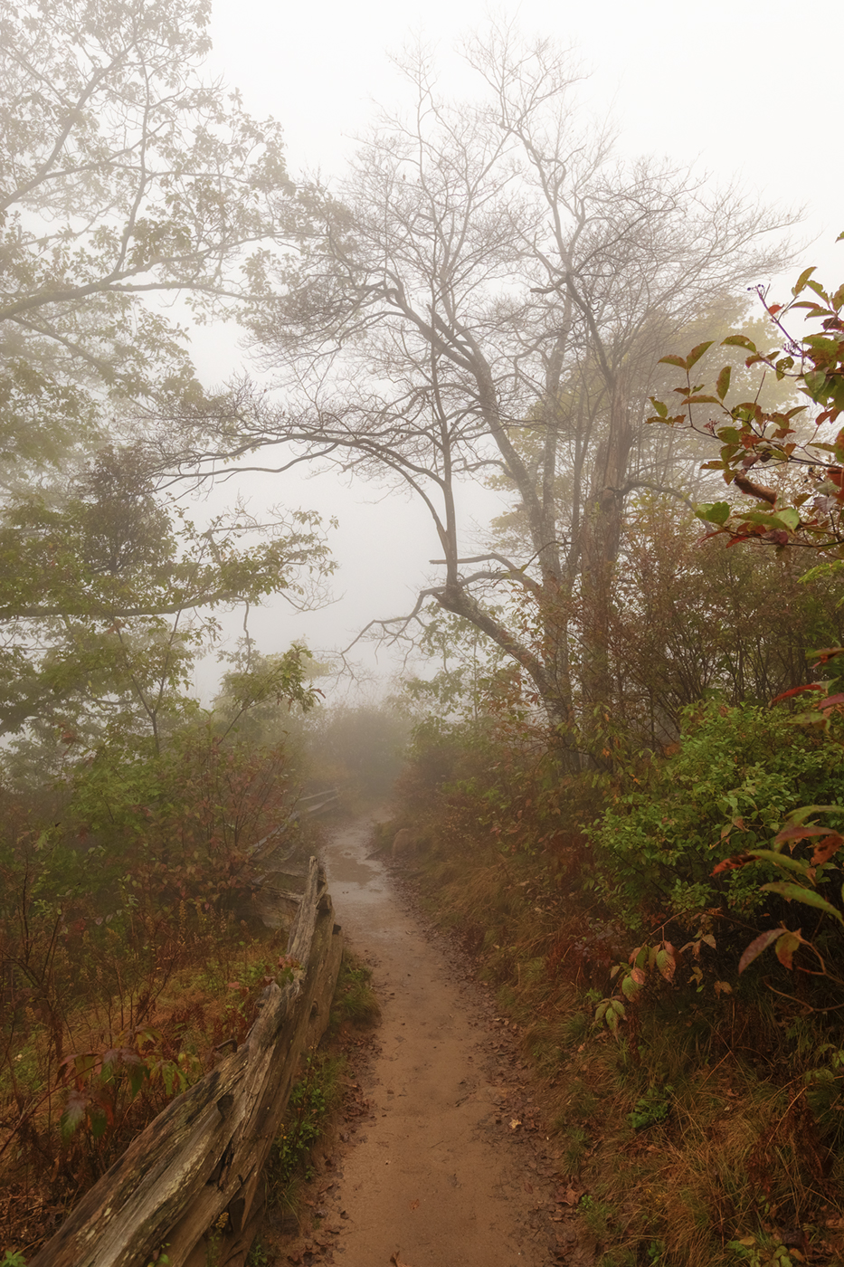 Graveyard Fields trail, Pisgah National Forest, North Carolina