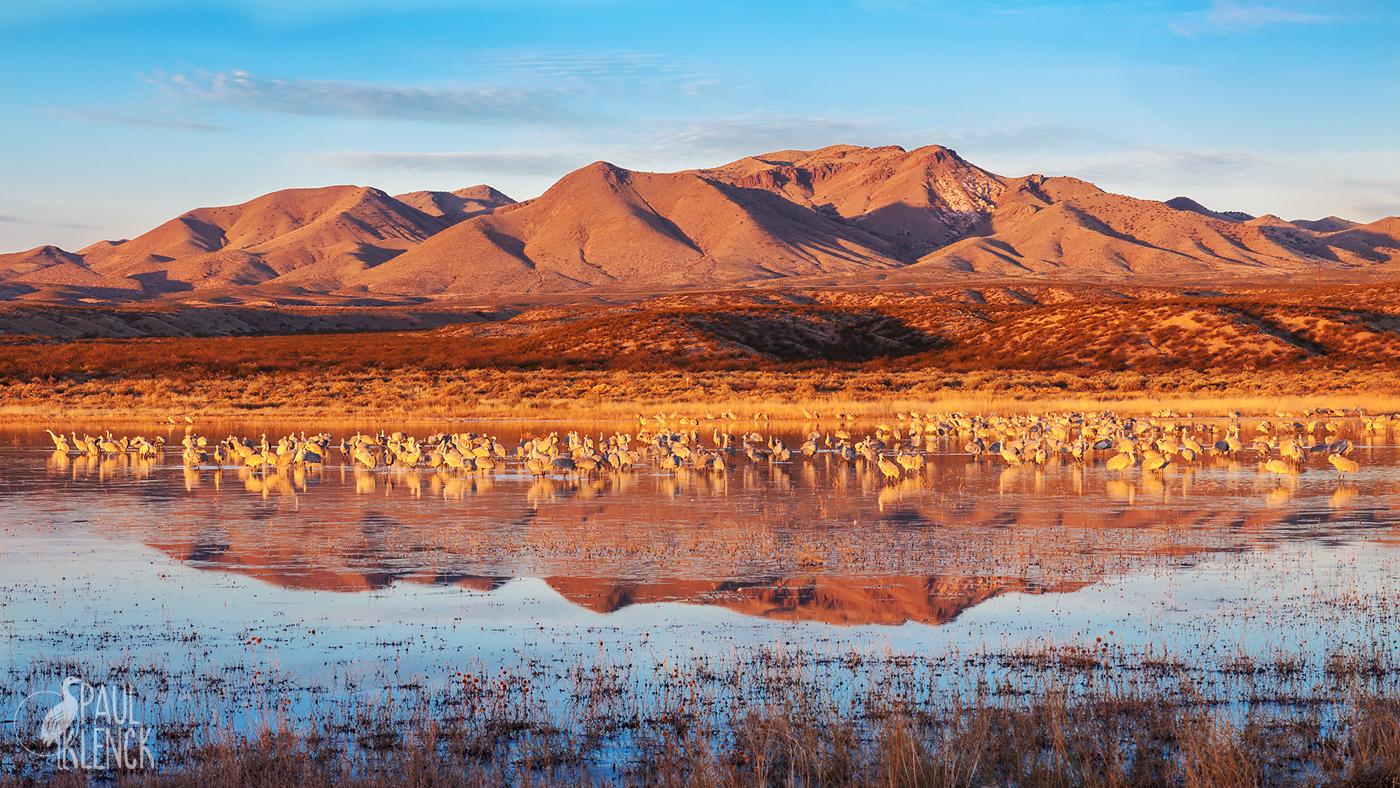 Cranepool, Bosque del Apache National Wildlife Refuge, New Mexico