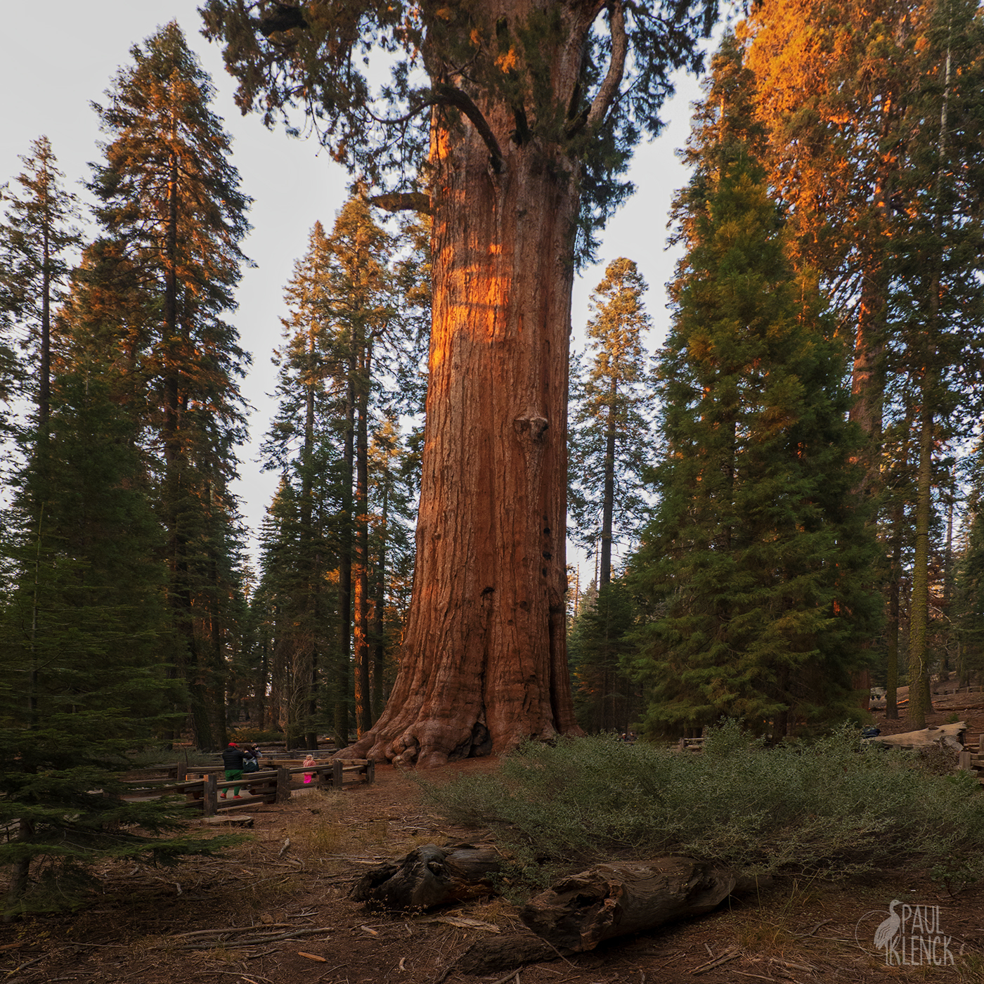 Family under The General Sherman