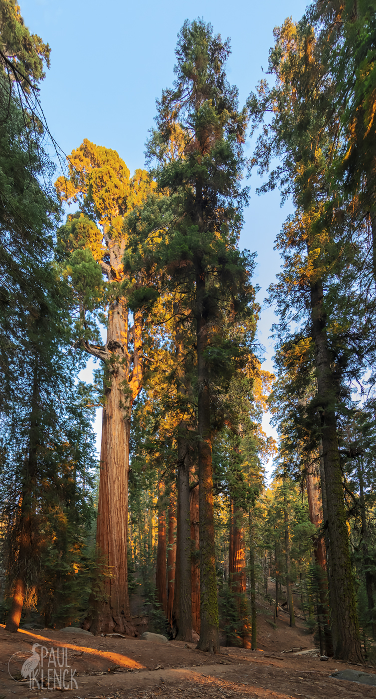 The Congress Trail, Sequoia National Park