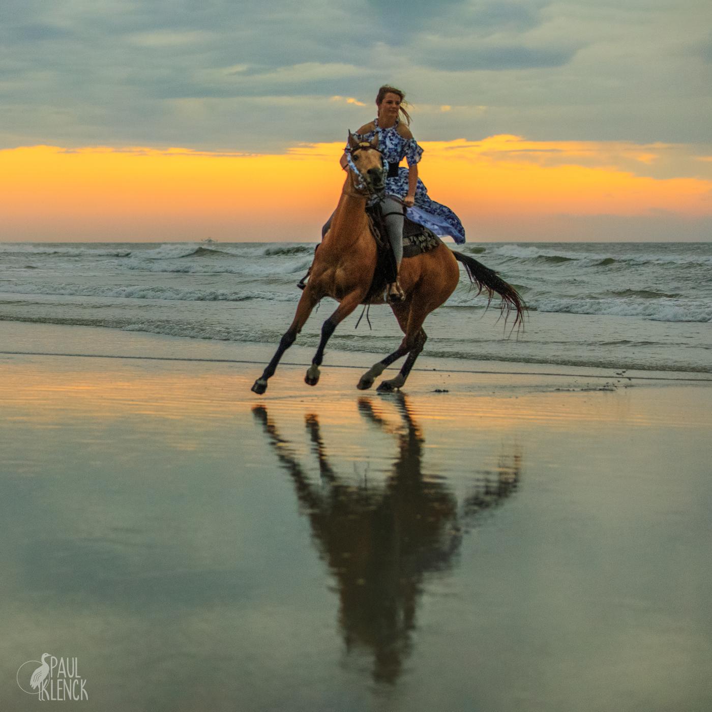 horse turn 8756a.jpg