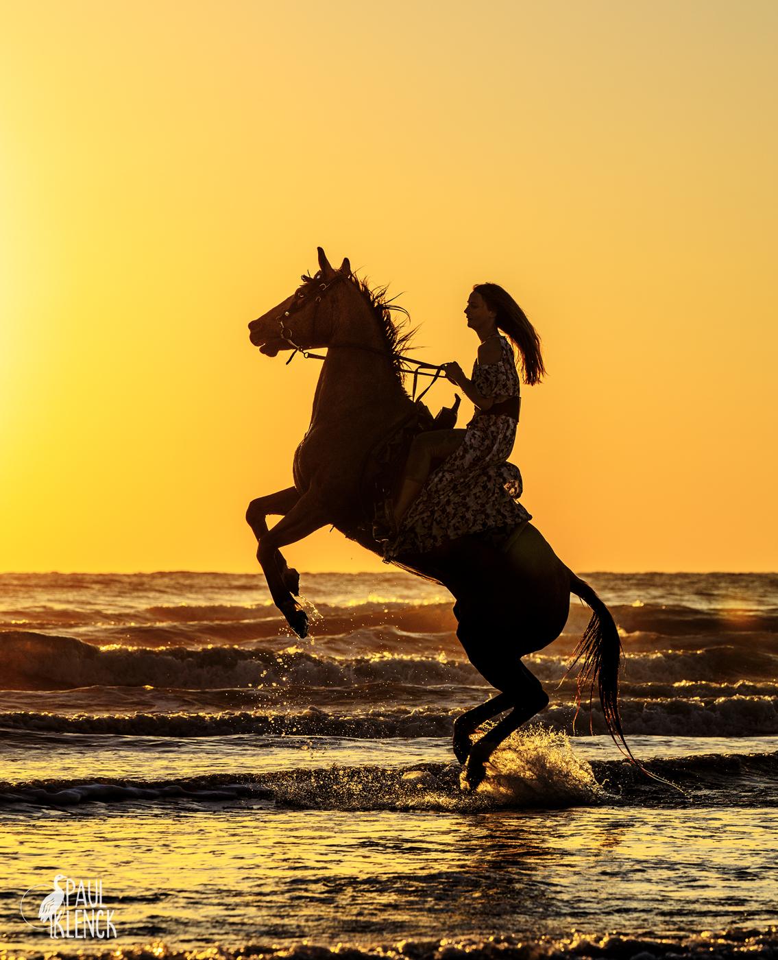 horse jump 9919.jpg