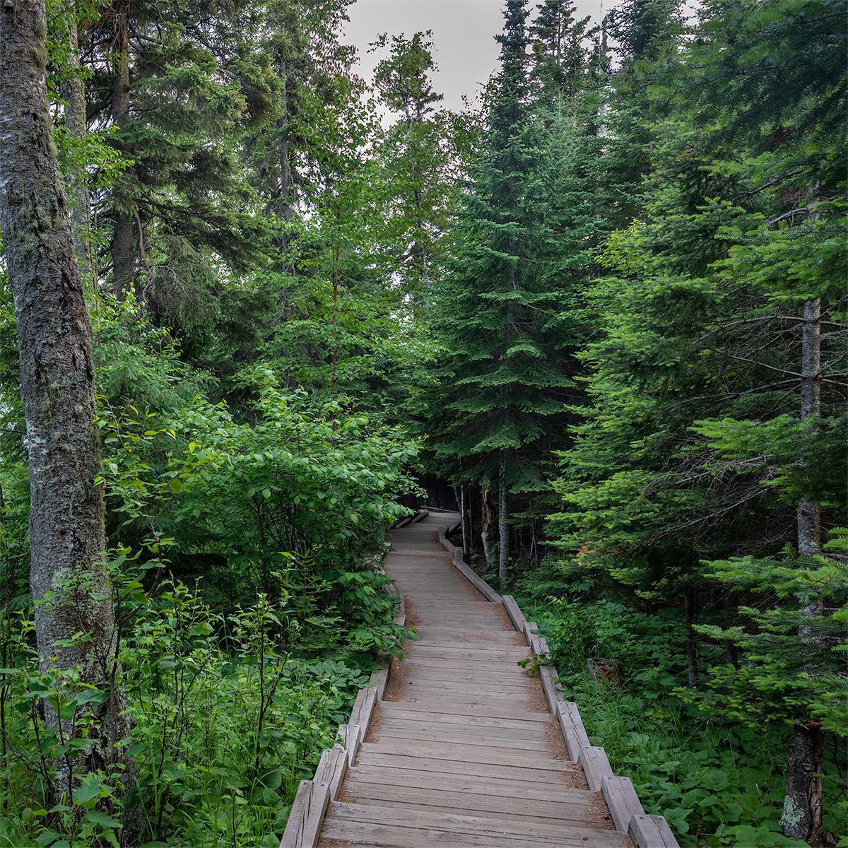 trail_7811.jpg