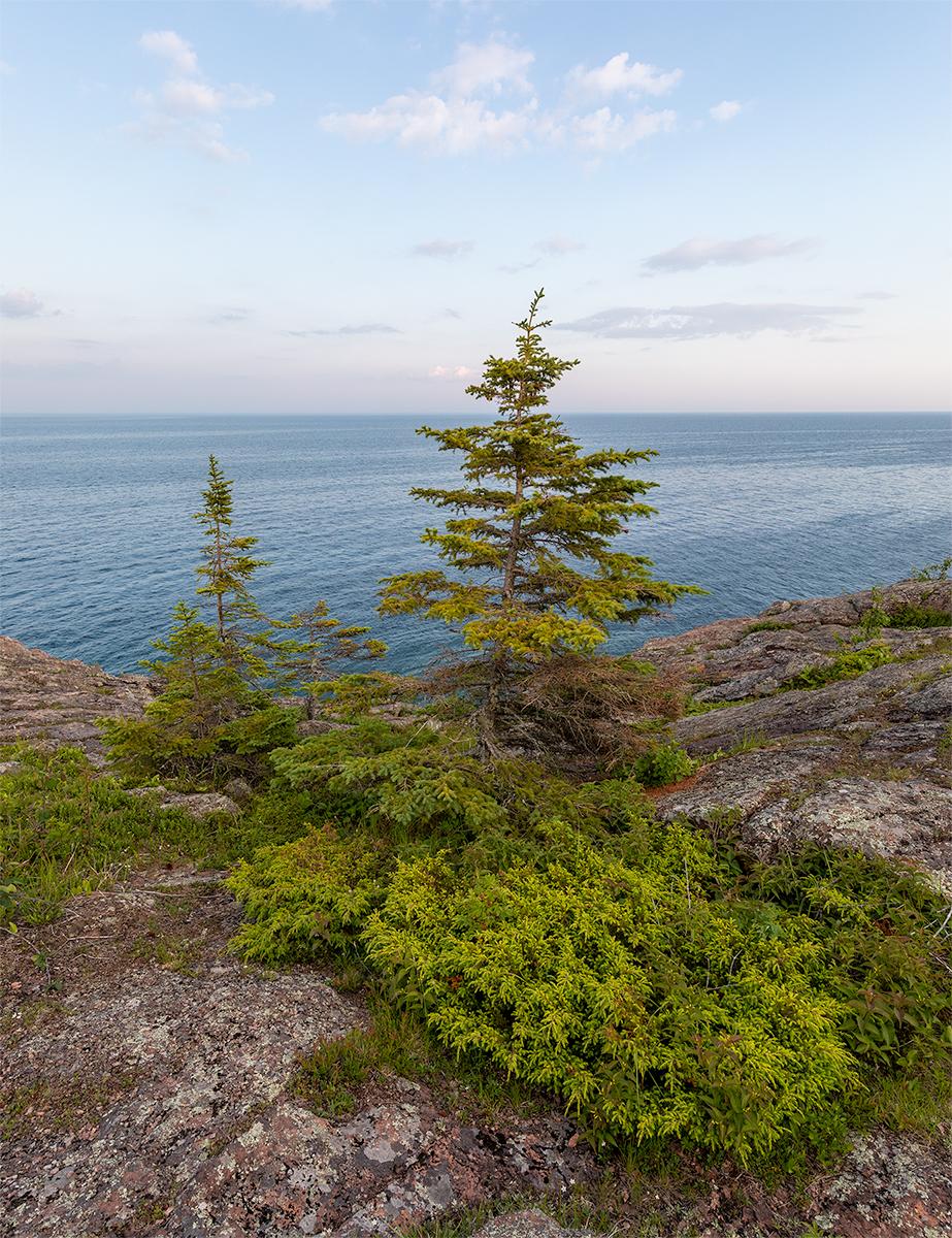 Lake spruce_7541.jpg