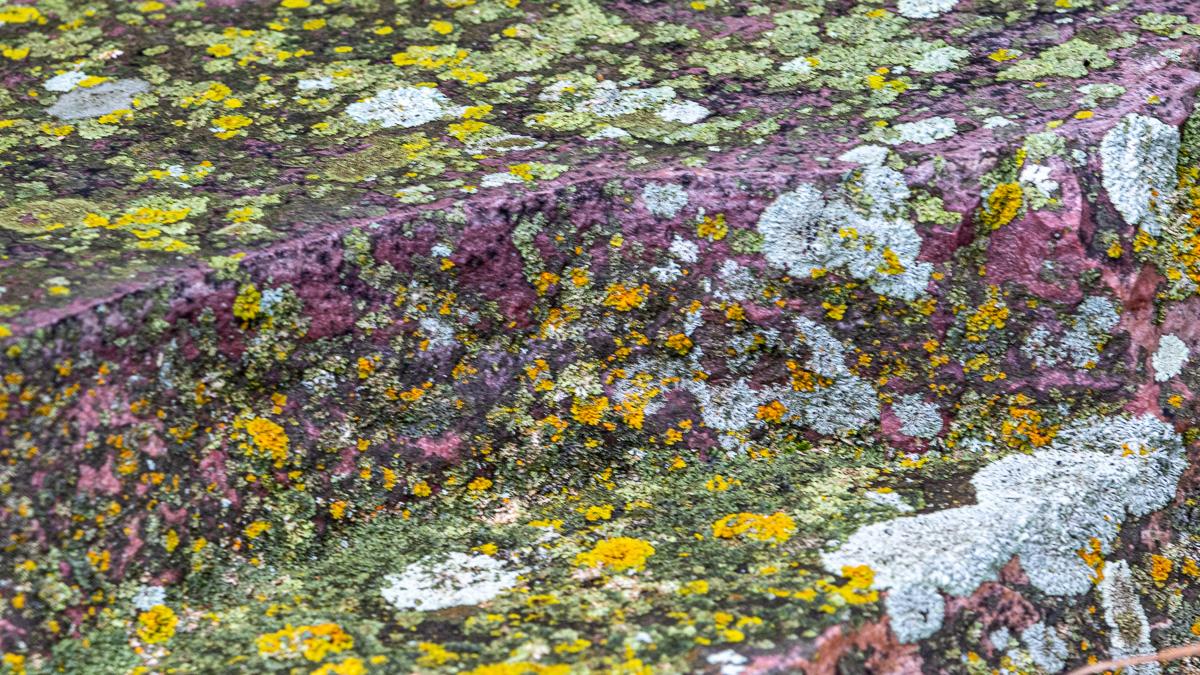 pipestone lichen-6962.jpg