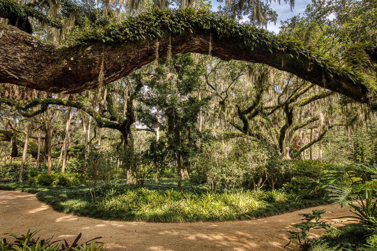 Washington Oaks Live oak eye-resurrection ferns and trail