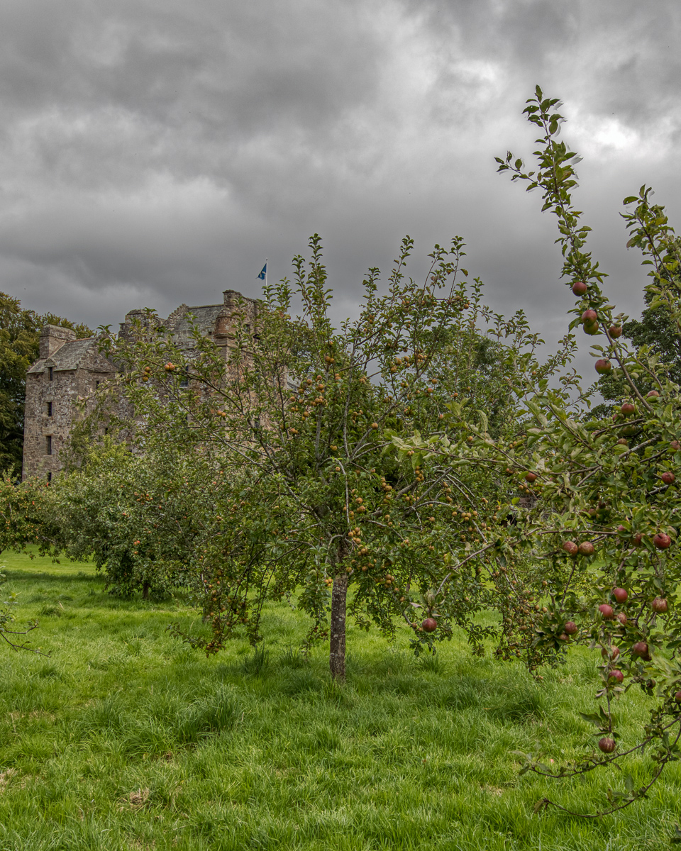 Orchard at Elcho castle