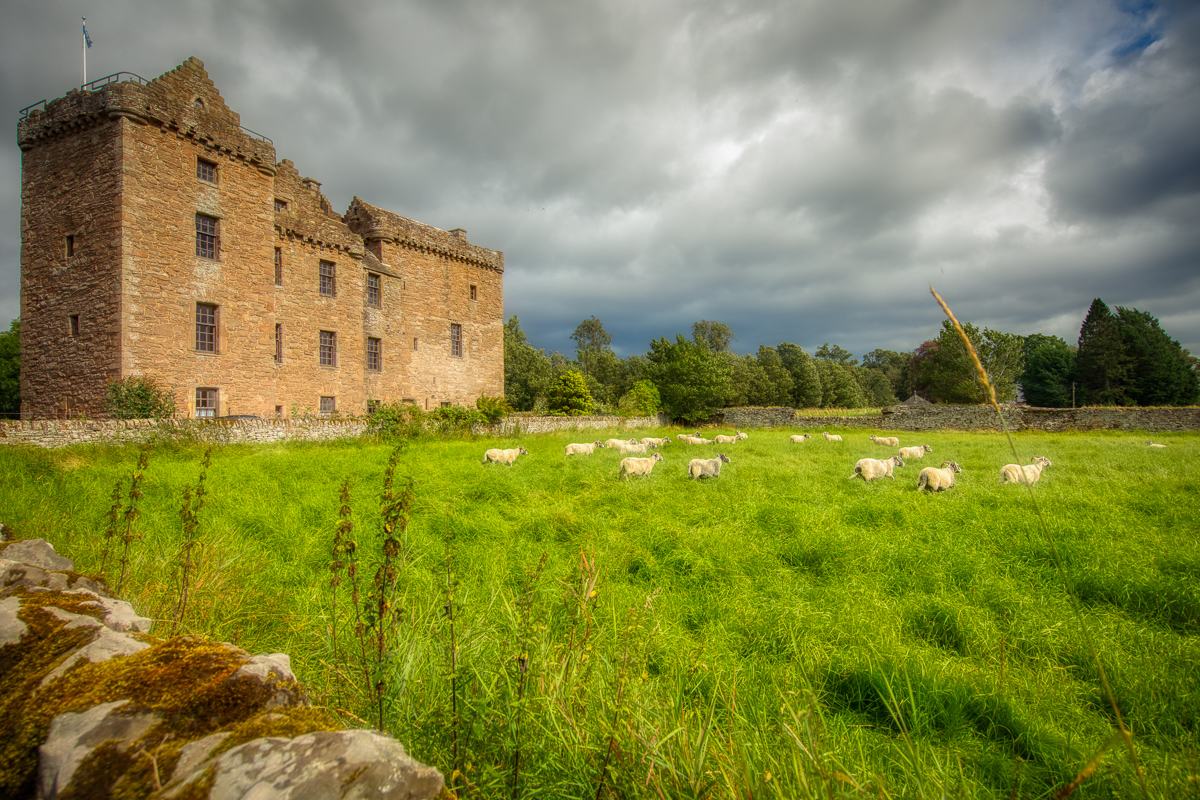 Sheep in the meadow at Huntingtower castle