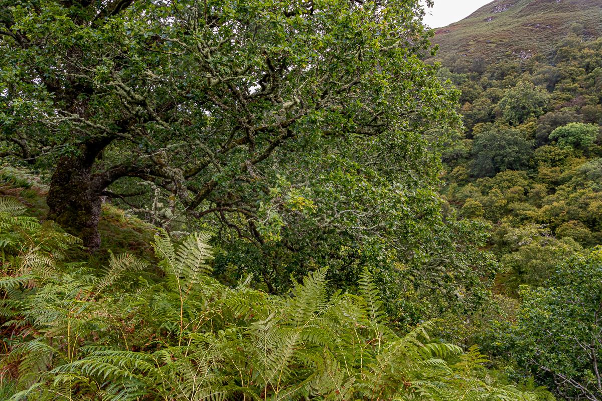 Lady falls curve oak-3274.jpg