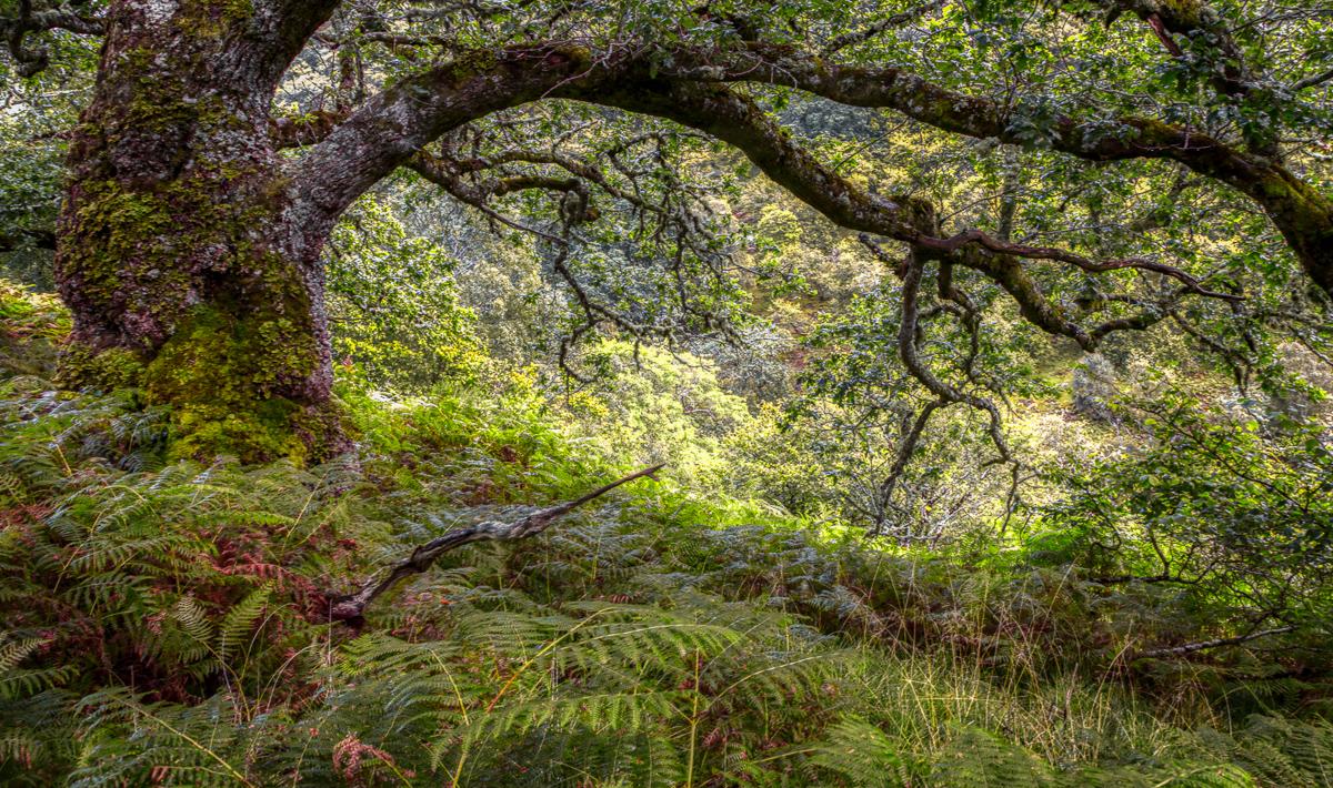 Lady falls oak drama-2.jpg