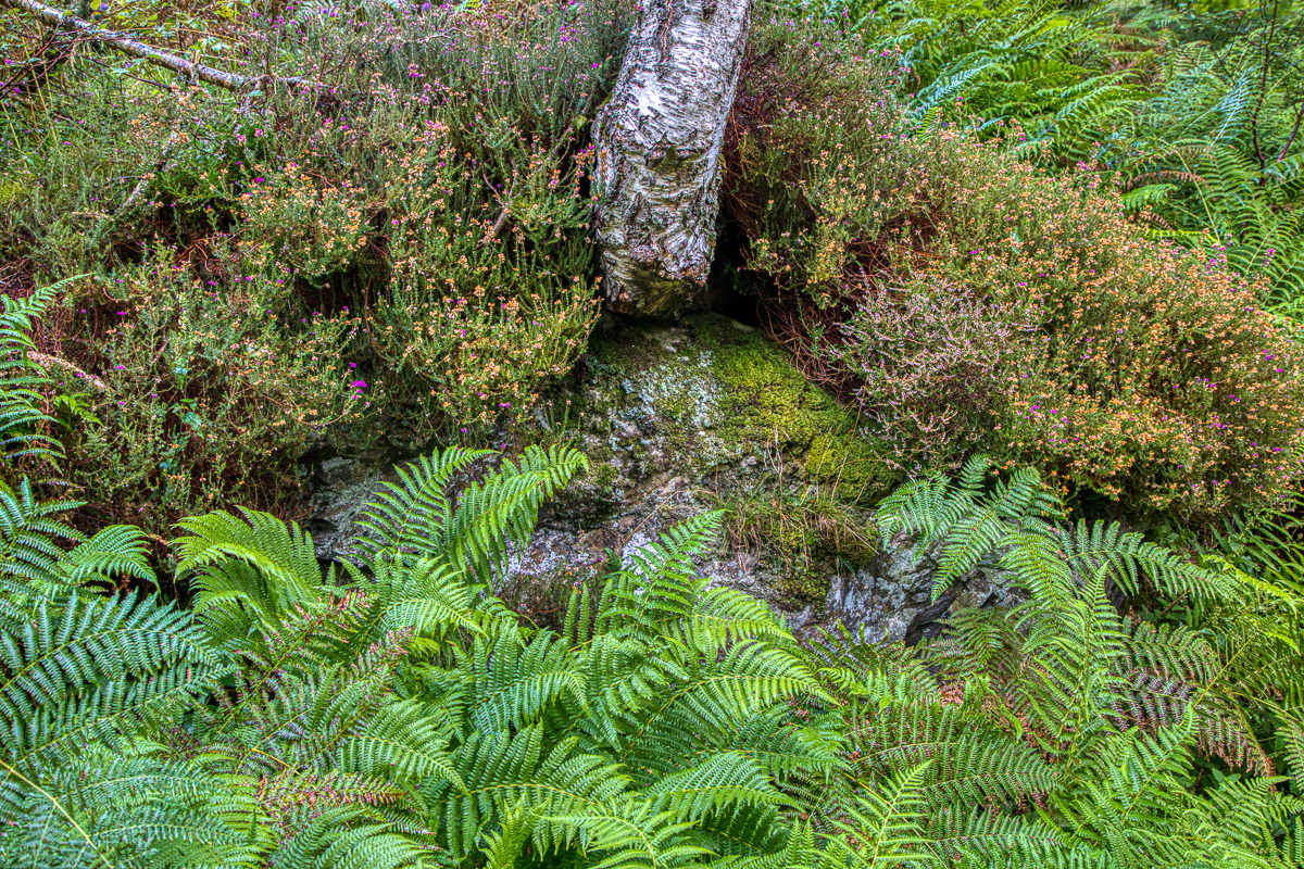 Lady falls ferns heather-2.jpg
