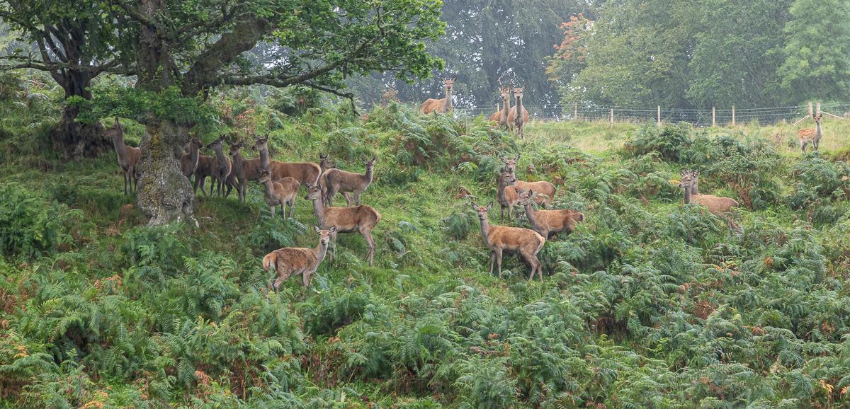 Lady falls deer-3073.jpg