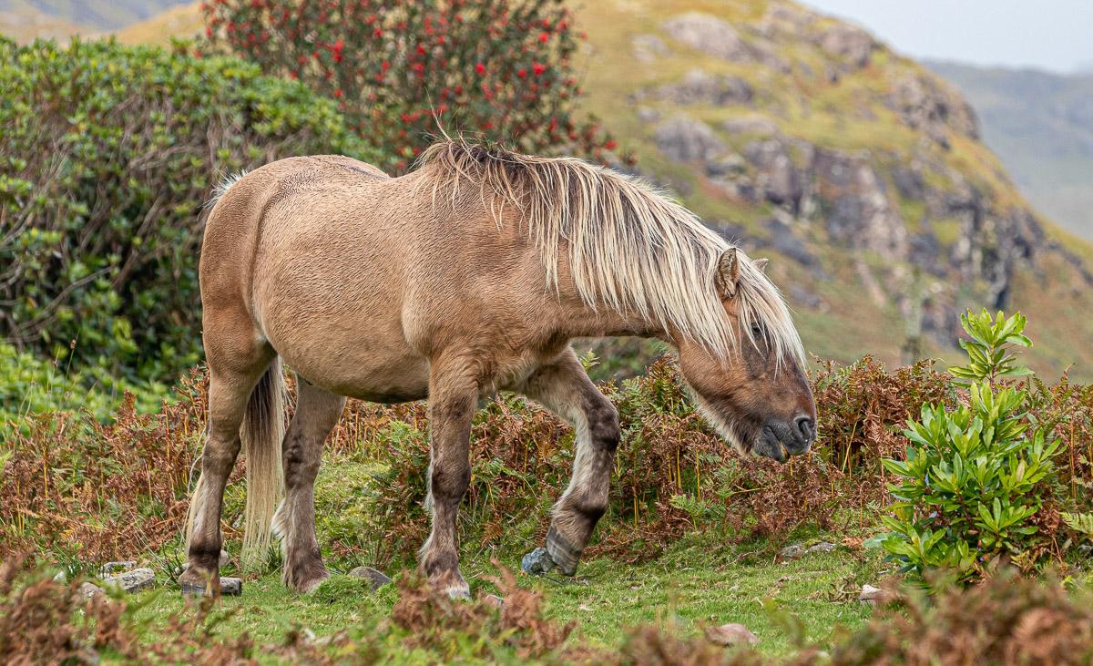 Mull horse-0905.jpg