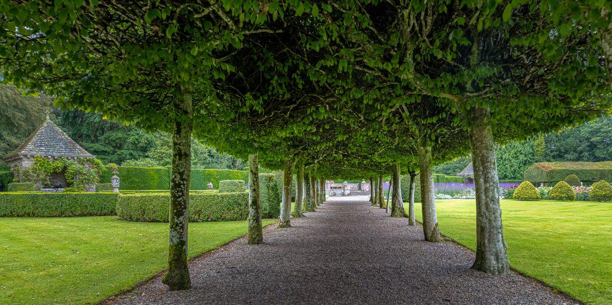 Tree arbor