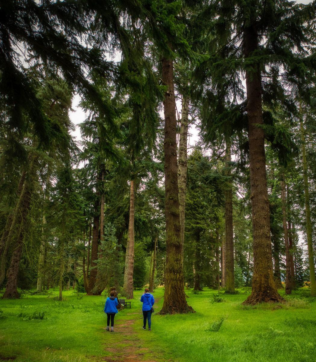 Macbeth trail at Scone pinetum