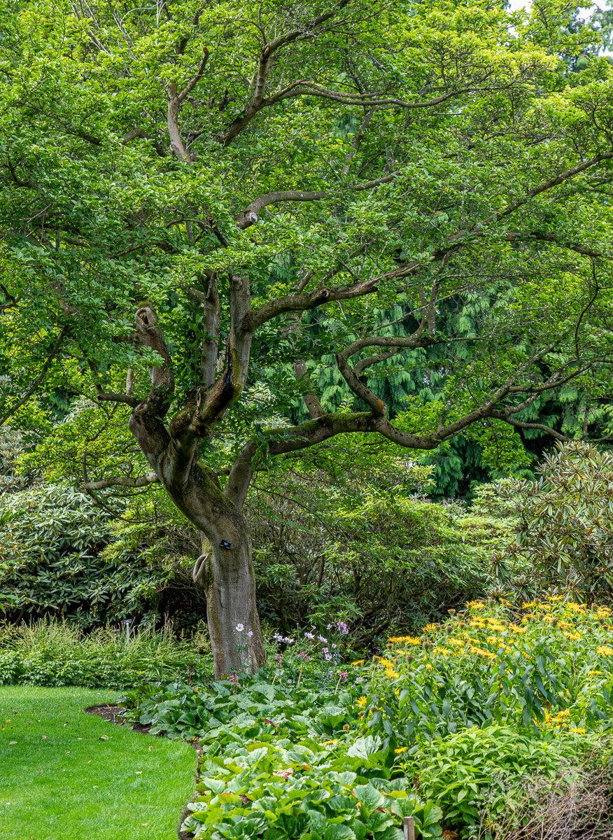 Royal Botanic Garden, Edinburgh