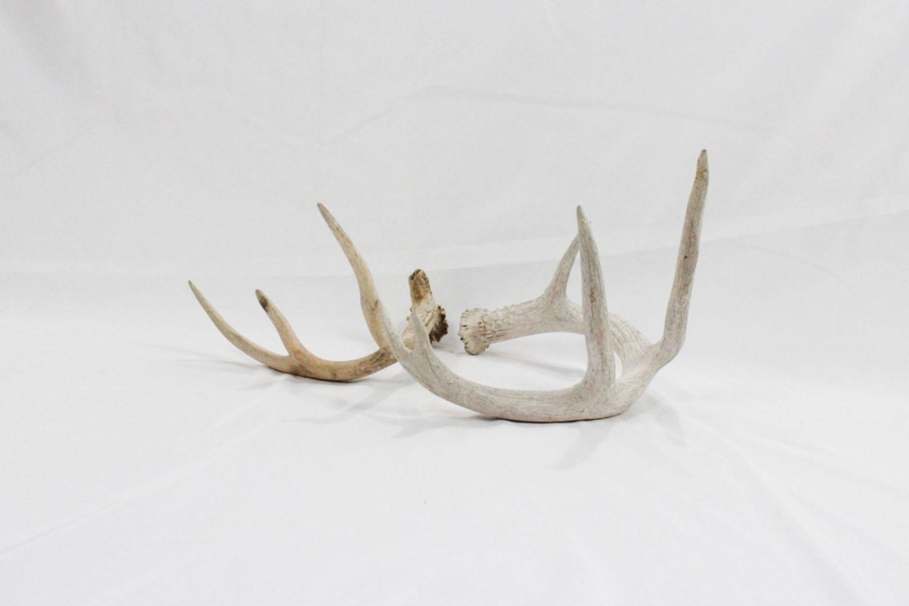 Deer Sheds - Scavenged Vintage Rentals