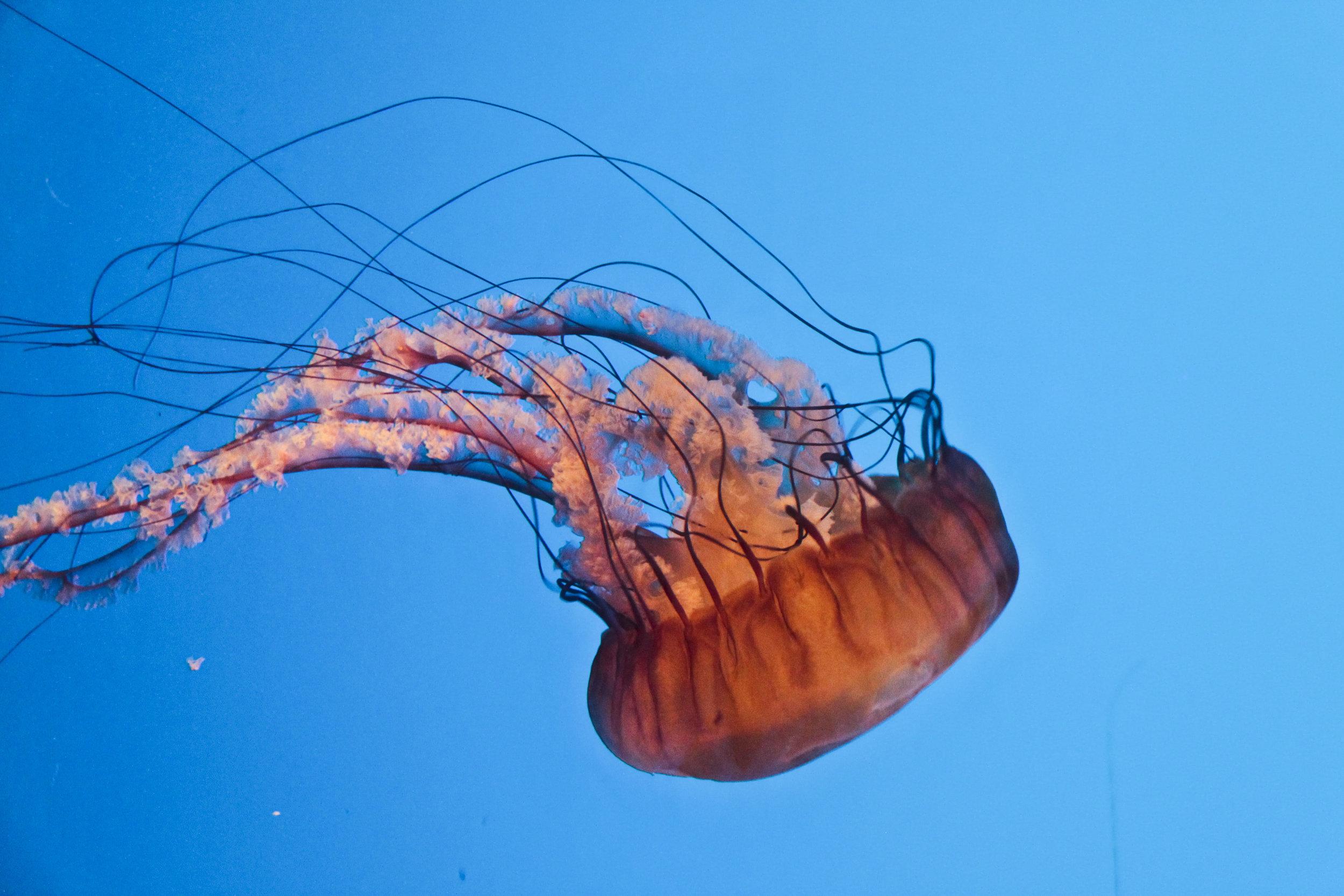20170924_Snap-snap_Jellyfish_Edited_2.jpg