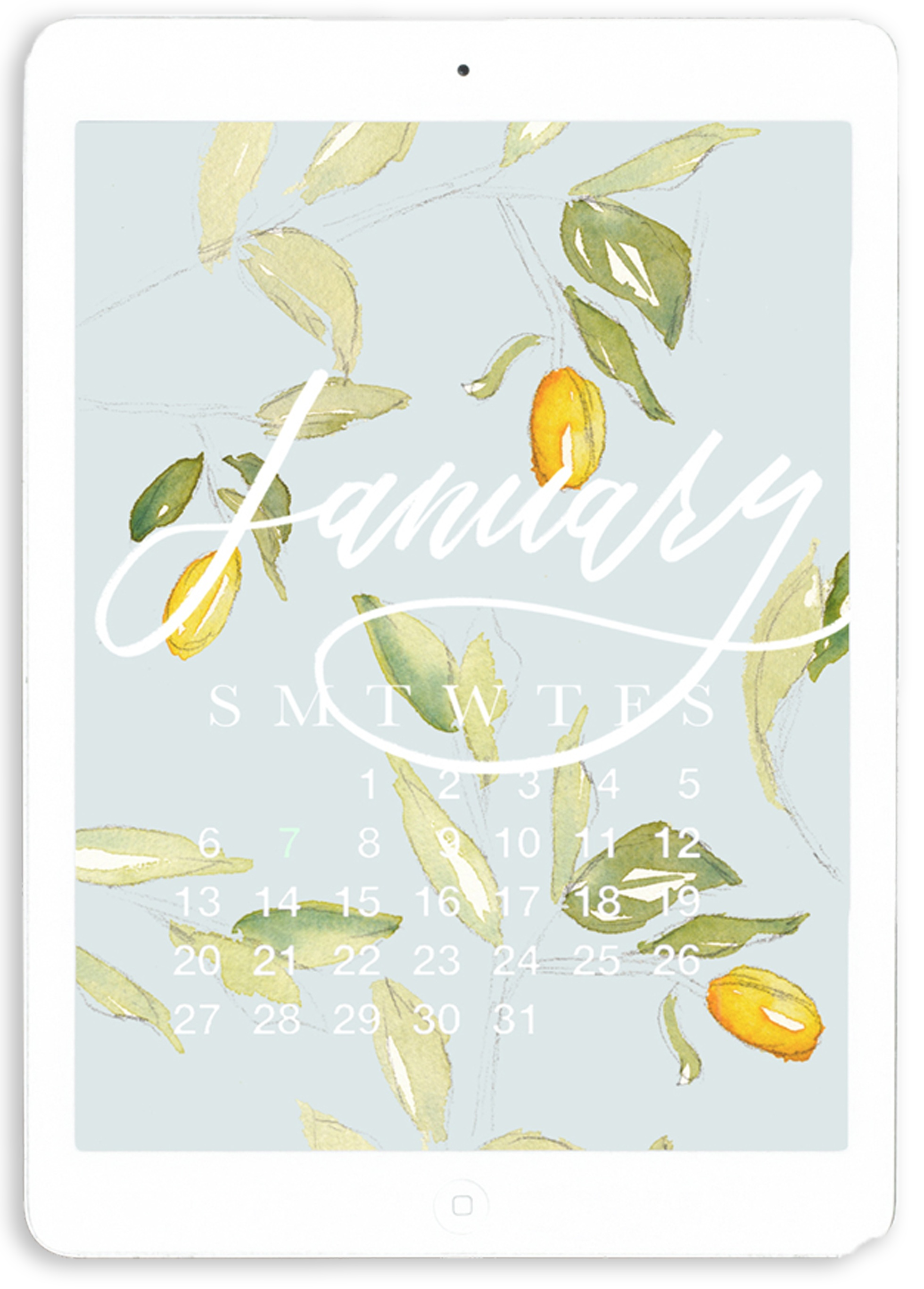 Free January 2019 Desktop and iPhone Calendar | Watercolor Kumquat Illustration with Brush Lettering Calligraphy | Lauren Antoniaa Calligraphy and Watercolor Artist