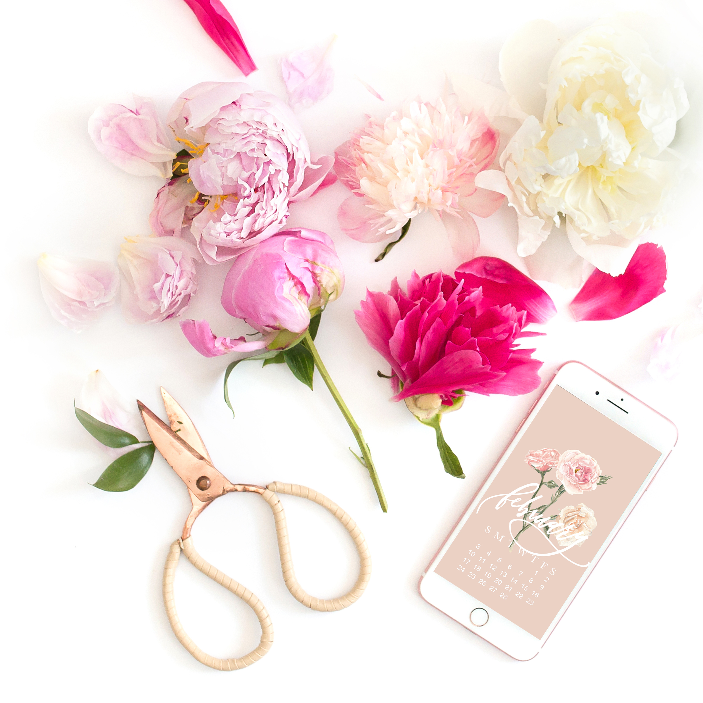 free-february-2019-desktop-and-iphone-calendar-watercolor-roses-brush-calligraphy-muted-pink.jpg