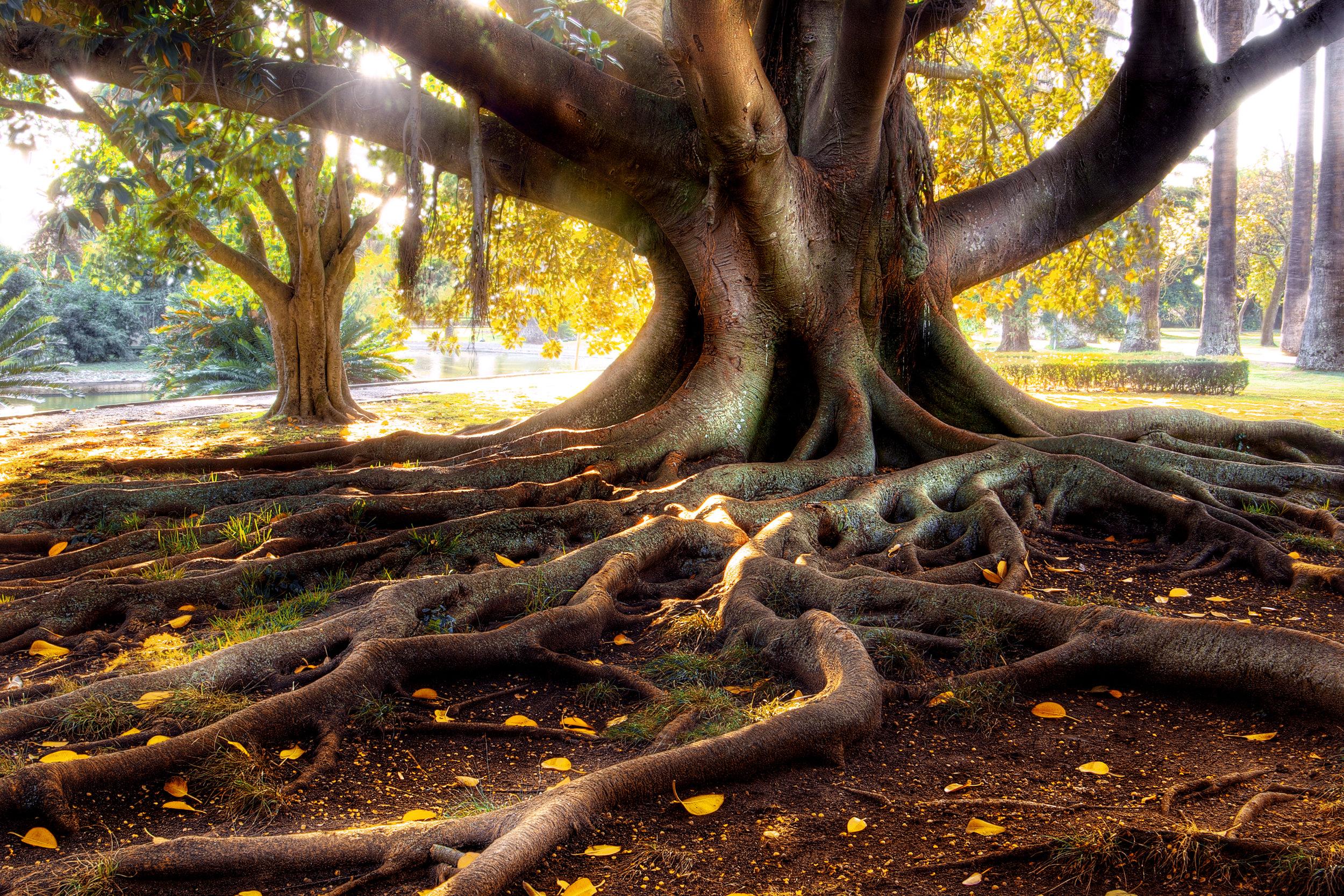 bigstock-Centenarian-Tree-3869209.jpg