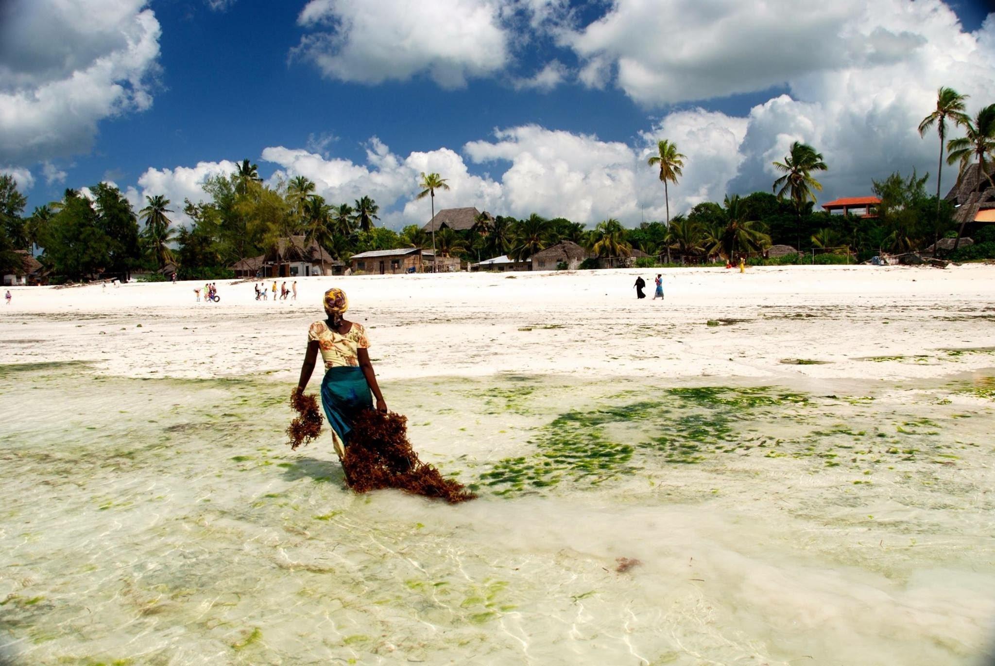 Cultivating seaweed - Zanzibar, Tanzania Africa