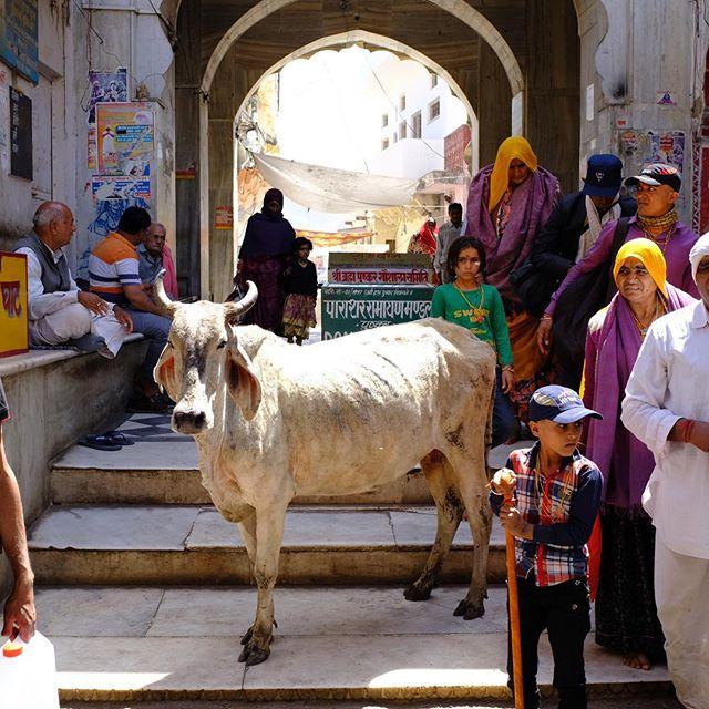 Streets of Pushkar ....#holipushkar #travelers #travelingacupuncturist #color #obxbalance
