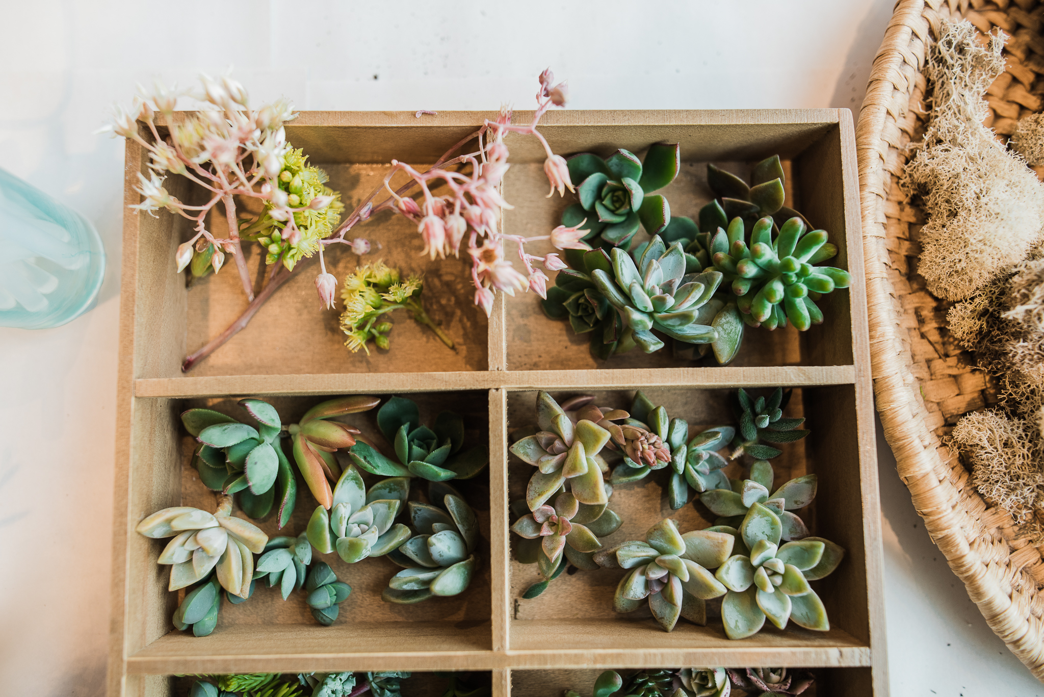 web-marie-monforte-photo_succulent-workshop-bhldn-28.jpg