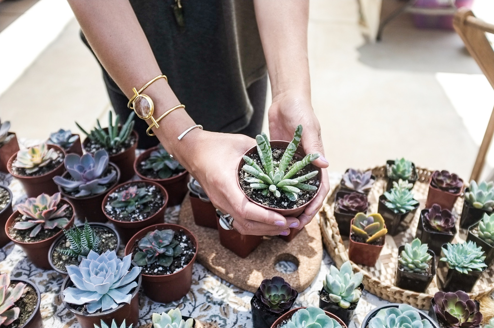 Beautiful & DiverseSucculent Plants - Our selection of species will delight with colors, textures, and shapes.