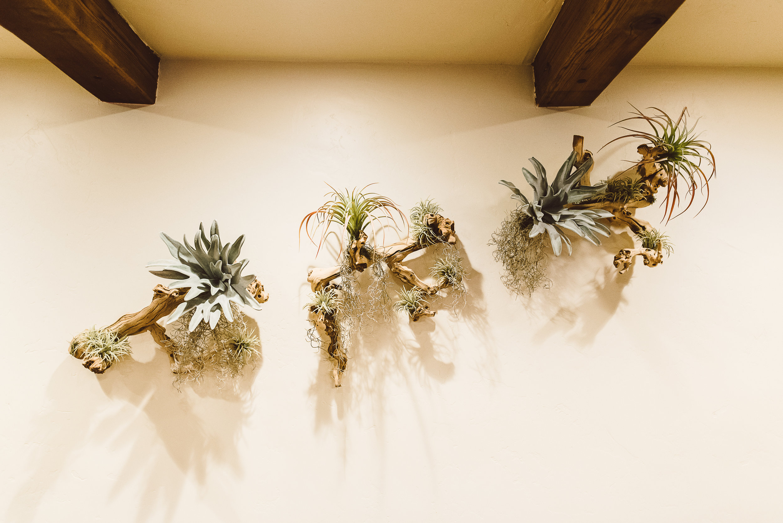Faux Fern & Airplant Branch Sculpture Installation at Cocina Del Charro San Marcos - Nov 2017