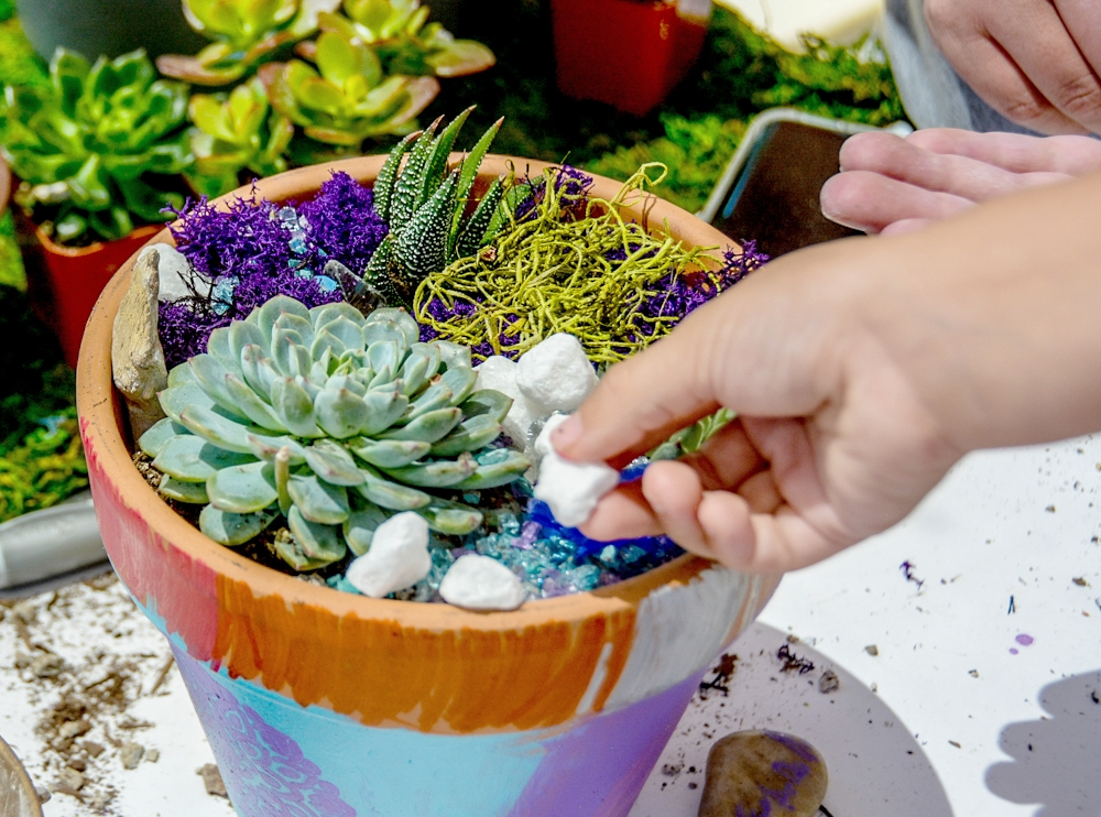 Paint + Plant - In this cross-disciplinary workshop, participants paint a clay pot and use it to plant beautiful succulents with decorative elements.