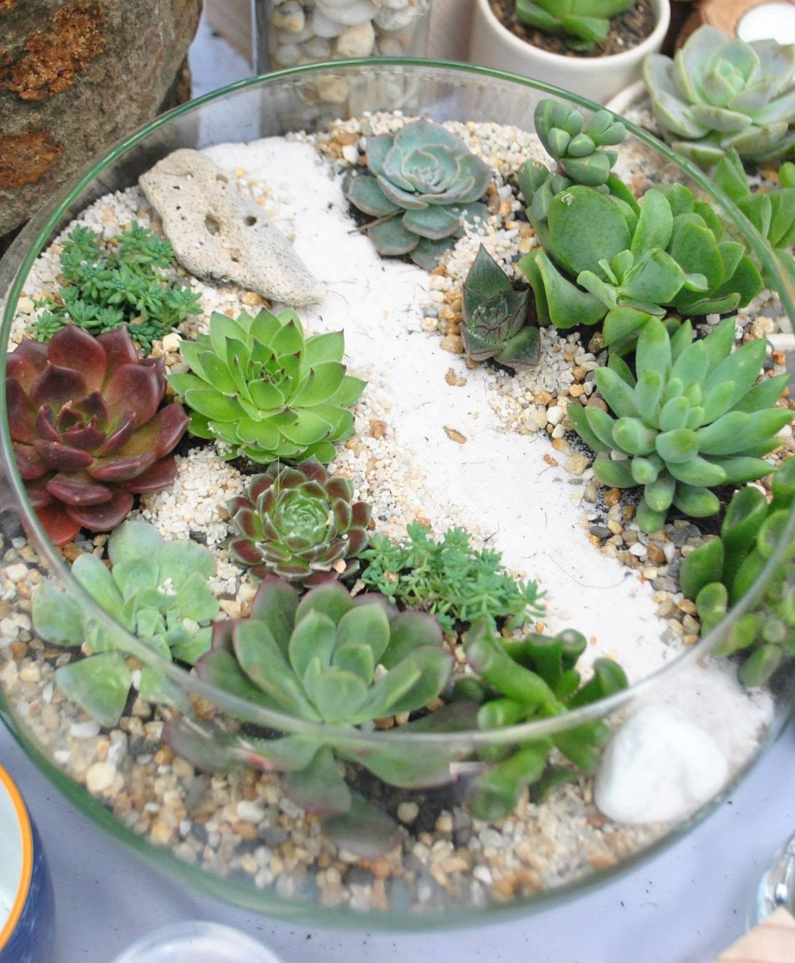 Fairy, Critter & Dinosaur Succulent Terrariums - In creating their own tiny magical world, students will gain more than basic understanding of plants and plant-care.