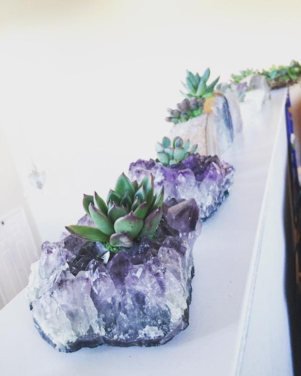 infinitesucculent.jpg