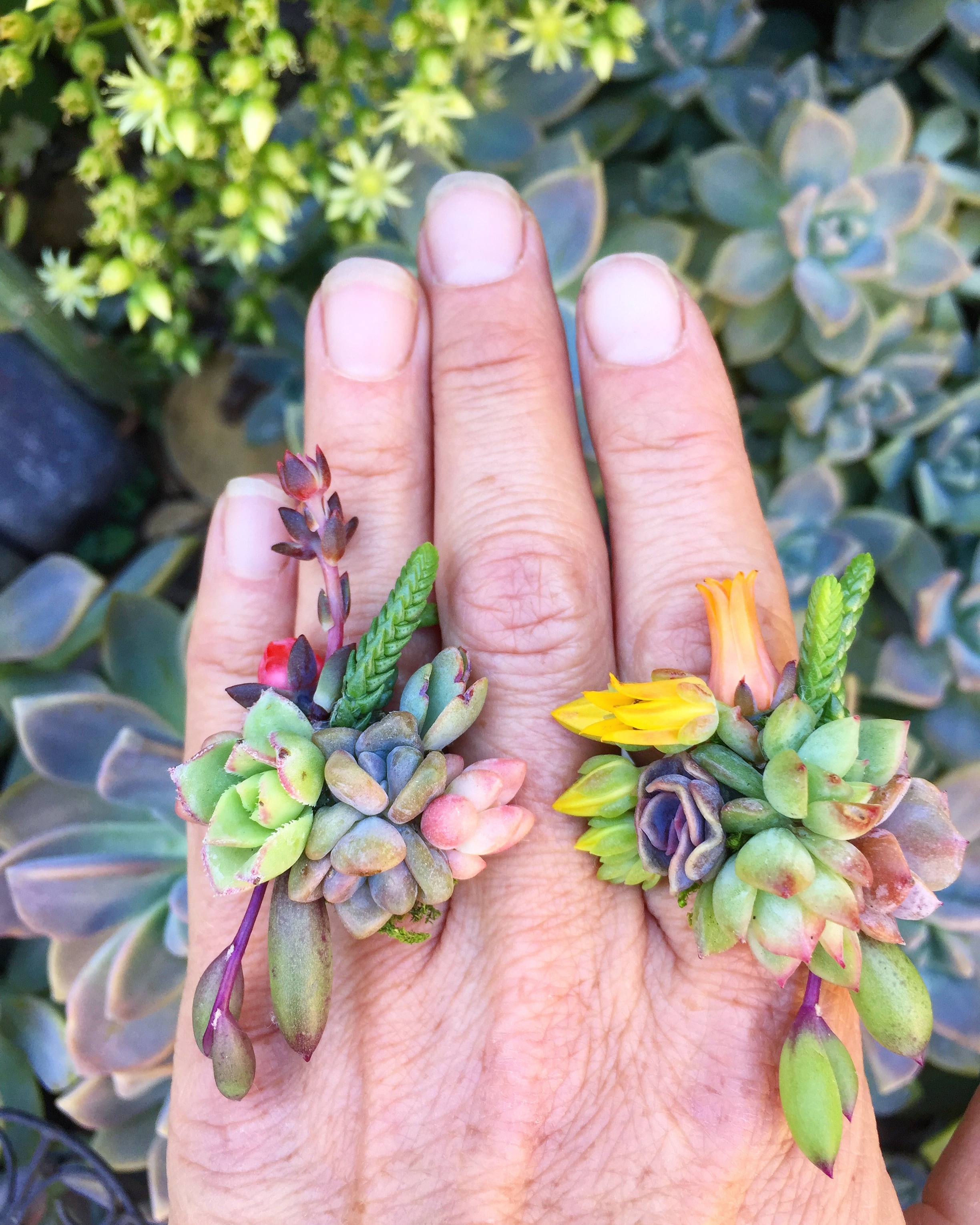 succulents_rings_living