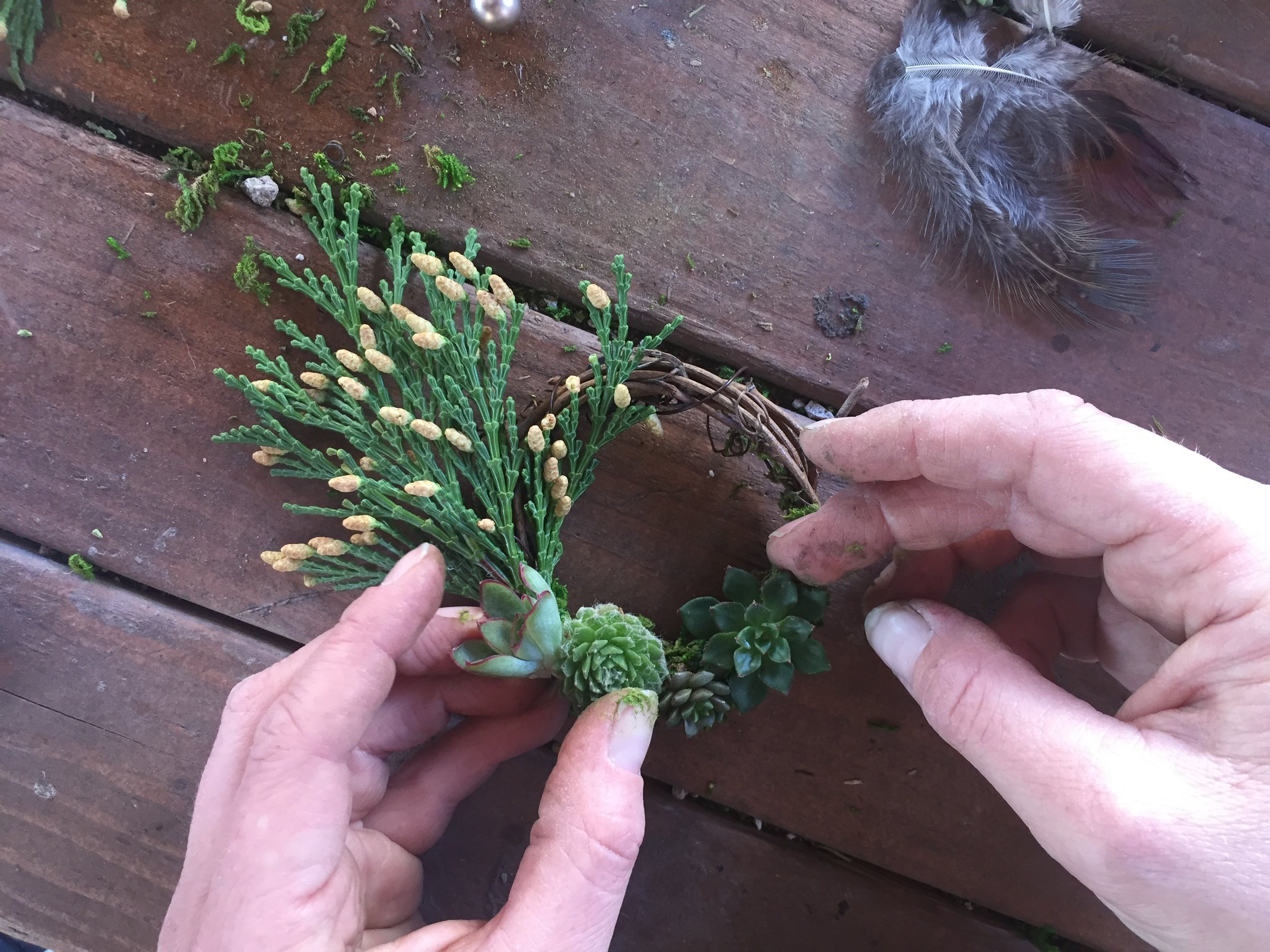 Step 5: Glue on succulent clippings