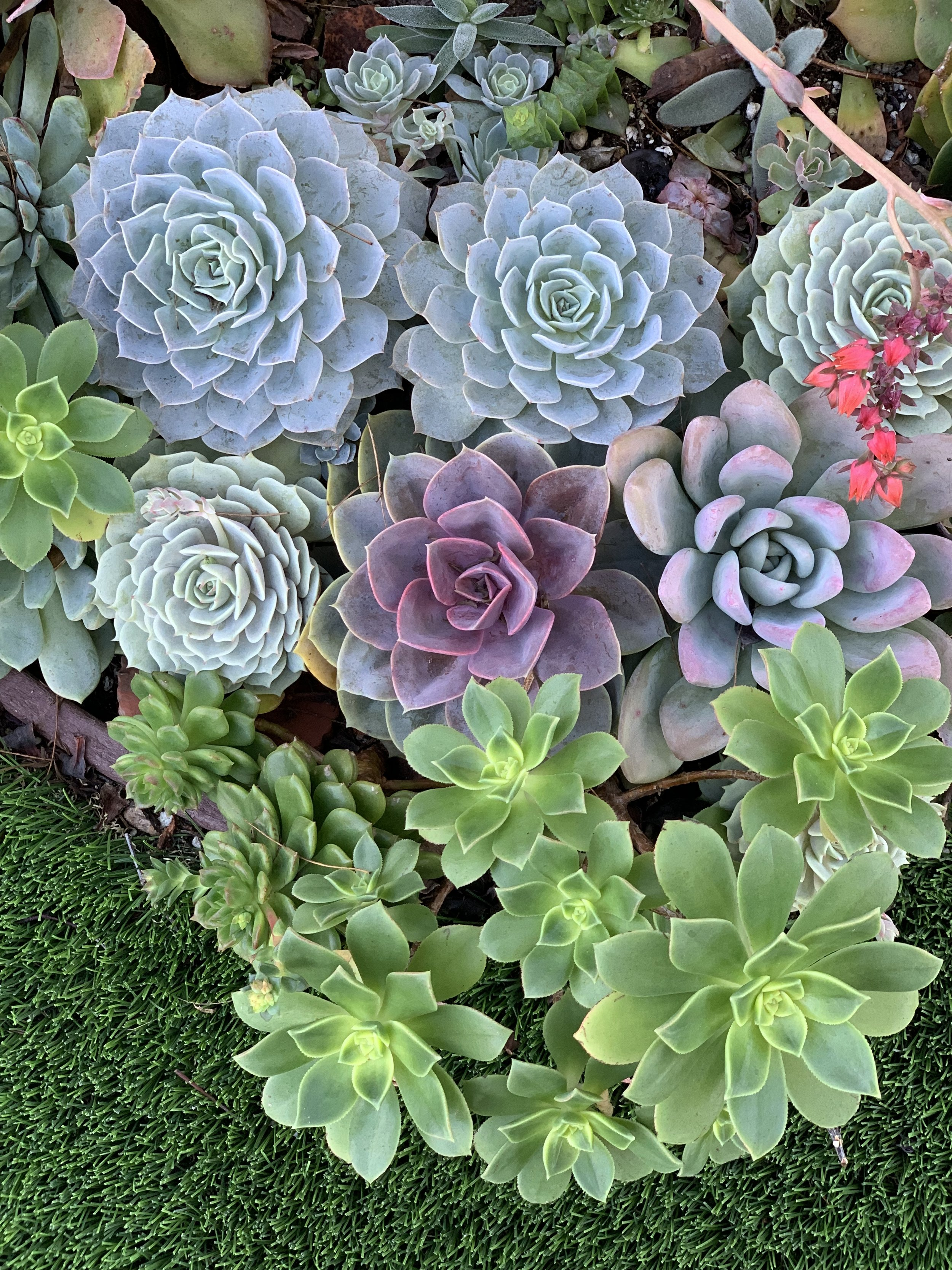 For me, working intimately with plants (and Nature) has gifted me numerous opportunities to heal, grow and always seek more learning. -