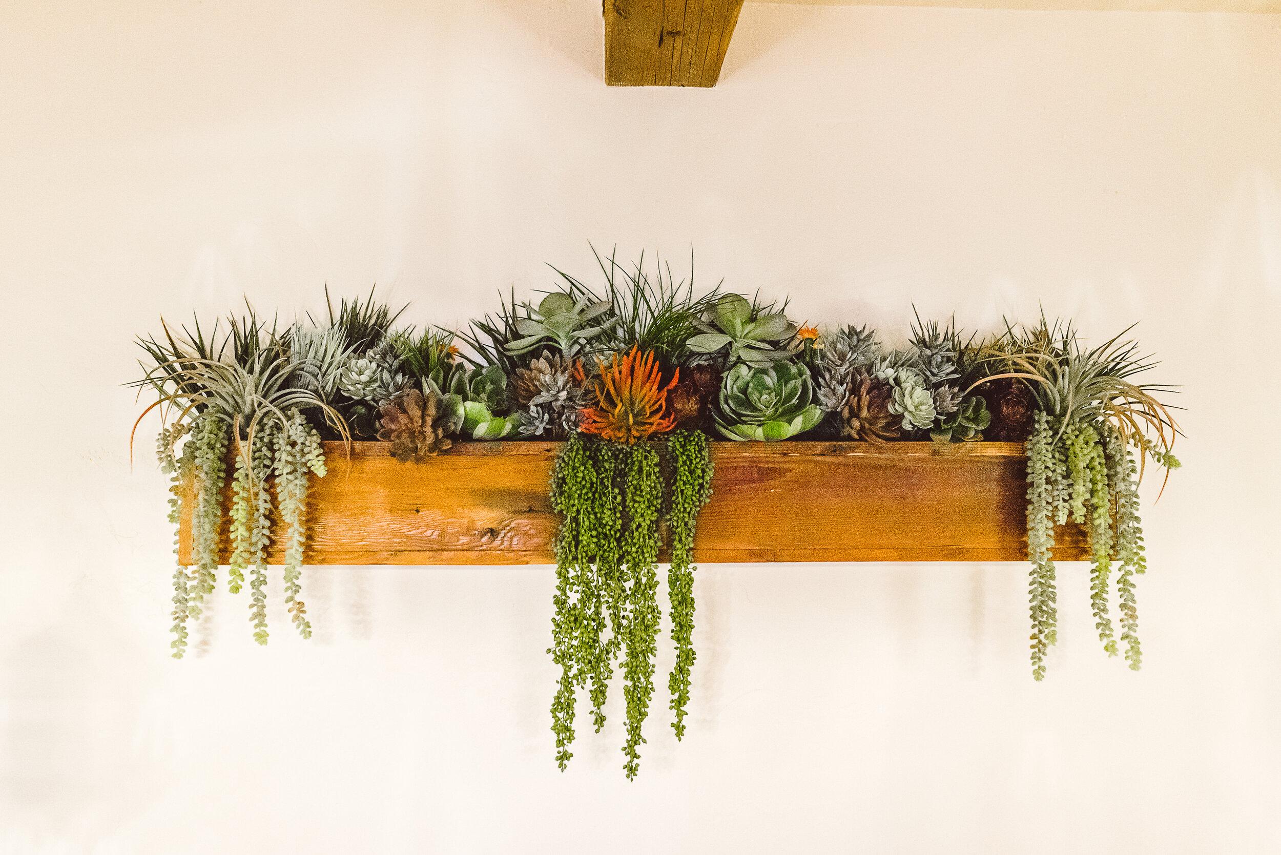 2018 Marie Monforte_Succulents at Cocina -8.jpg