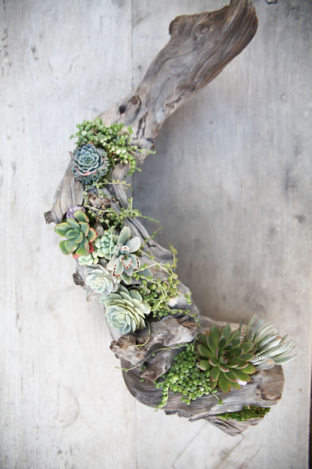 Corey Villicana full driftwood.jpg