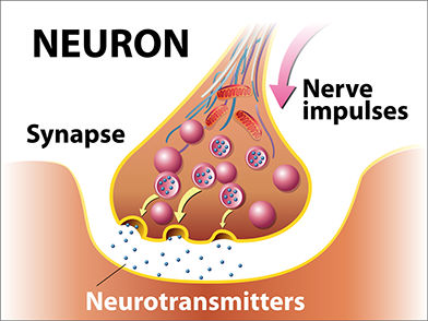 NEUROTRANSMISSION  Many habit-forming drugs are chemicals that have been designed to move from the blood stream into the brain. They are able to cross the blood-brain barrier that otherwise protects the brain from toxins.