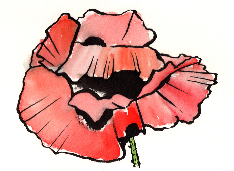 poppies-web1.jpg