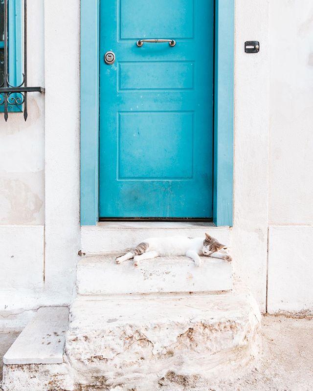 When life gives you lemons just remember there's an entire city with adorable free range cats 🦁🤷🏻♀️ - - - - - #travel #passionpassport #mytinyatlas #traveldeeper #placestogo #lifewelltravelled #dametraveler #exploretocreate #travelstoke #staywild #stayandwander #theglobewanderer #lonelyplanet #roamtheplanet #instatravel #travelgram #igtravel #instapassport #natgeotravel #huffposttravel #cntraveler #lifeawaits #travelaway #greece #athensgreece #athens #sonya7riii