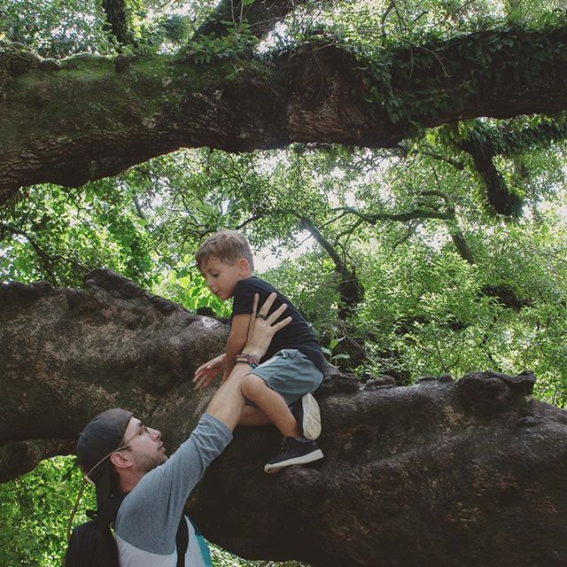 Live oaks #Nola #neworleans #liveoak #life #trees #audubonzoo #zoo #magazinest #uptown #weekendtrip #summerfun #summer2018