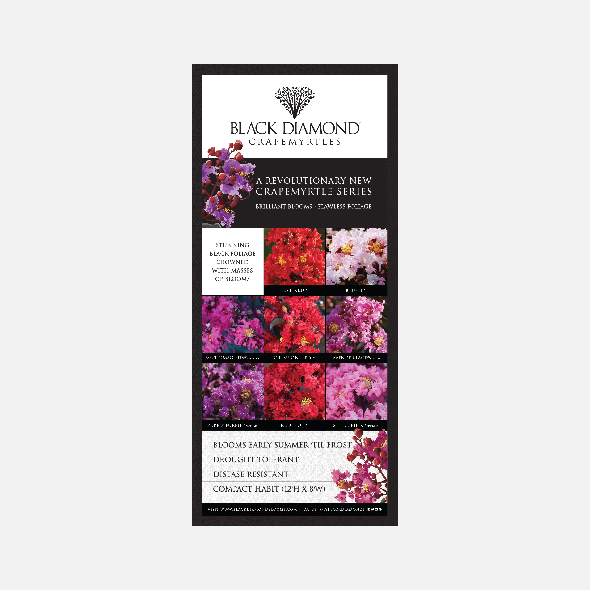 Black Diamond Crapemyrtles vertical banner