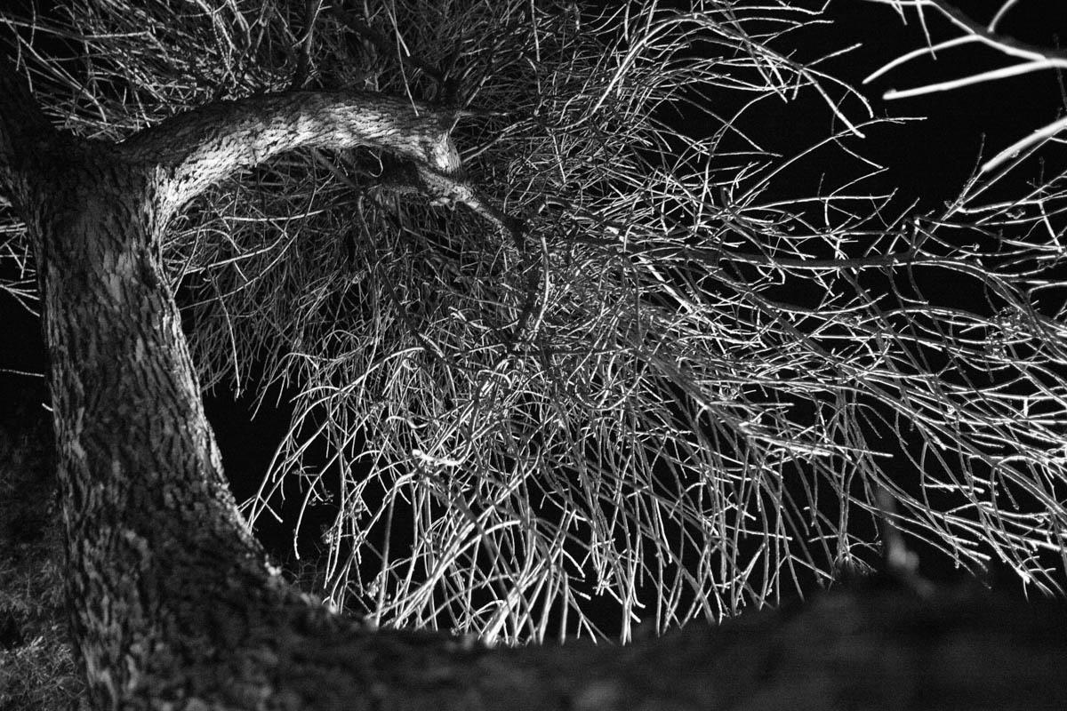 Porcupine Rest Nocturnal