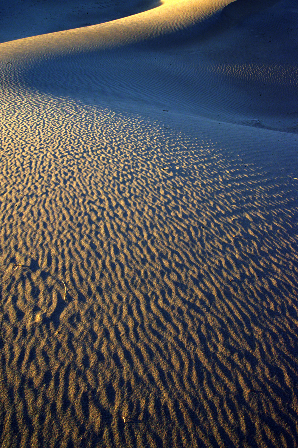 Late Afternoon Dune, Death Valley