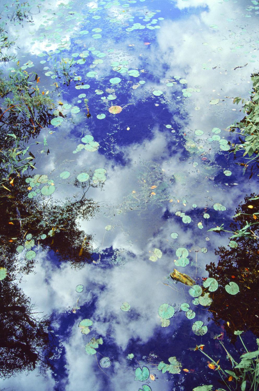 Lily Pad Sky, Michigan