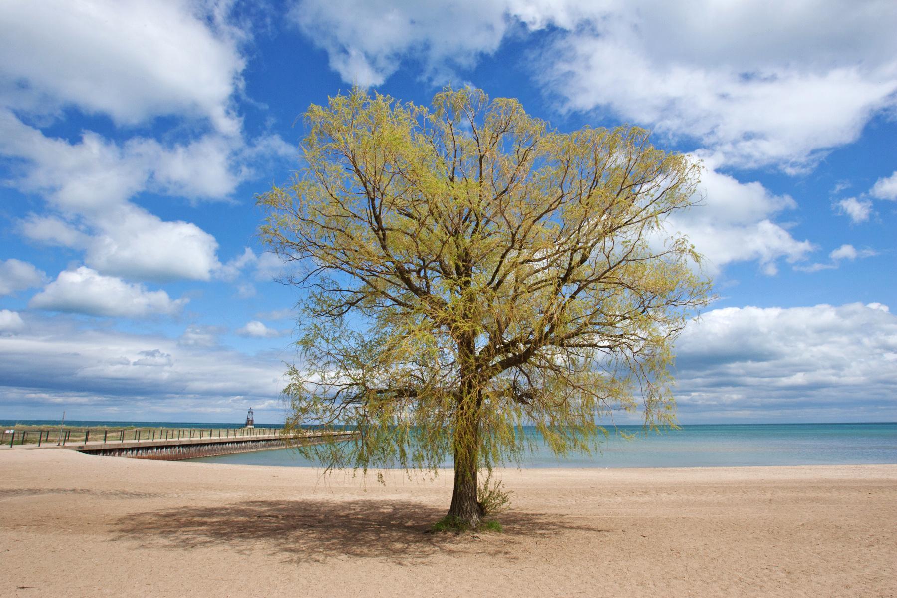 One Tree Beach, Chicago
